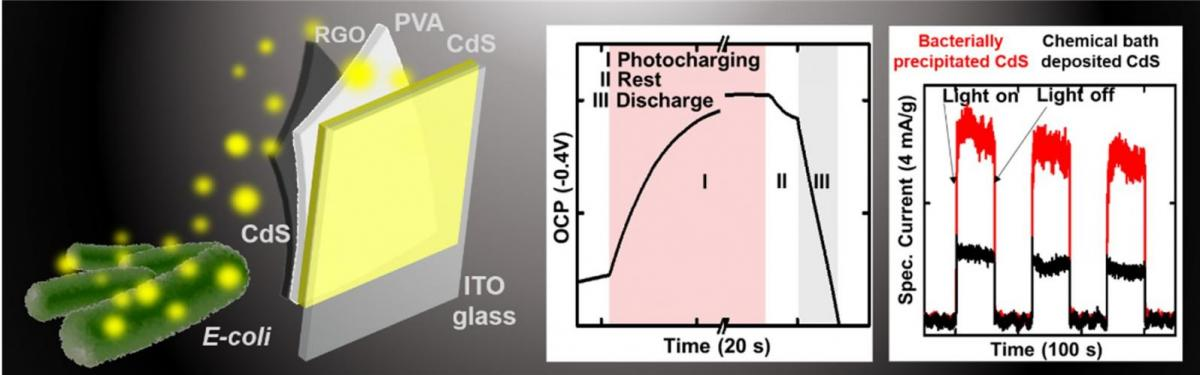 Photocharged capacitor made of bacterially precipitated CdS nanoparticles