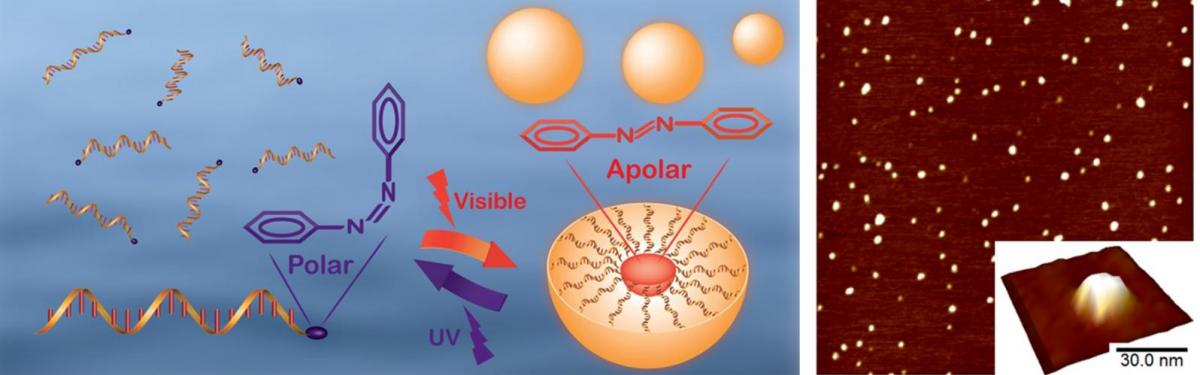 photoresponsive DNA micelles